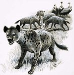 Hyenas feeding on a zebra carcas with vultures looking on Wall Art & Canvas Prints by English School