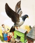 Pigeon Postcards, Greetings Cards, Art Prints, Canvas, Framed Pictures, T-shirts & Wall Art by Ron Embleton