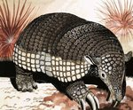 Giant Armadillo Wall Art & Canvas Prints by Helen Haywood
