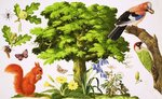 The Wonderful Oak Tree Fine Art Print by English School