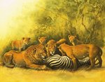 Lions feeding on a zebra carcass Fine Art Print by English School