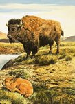Buffalo Wall Art & Canvas Prints by English School