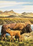 Buffalo Fine Art Print by English School