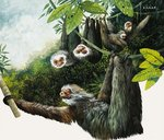 Two-toad Sloth Wall Art & Canvas Prints by English School
