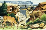 Mule deer at the Grand Canyon National Park Fine Art Print by English School
