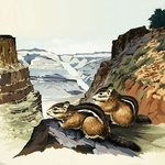 Chipmunks at the Grand Canyon National Park Fine Art Print by English School