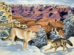 Puma and Coyote meet at the Grand Canyon National Park Fine Art Print by English School