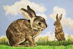 Rabbitis Wall Art & Canvas Prints by English School