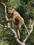 Lemur Wall Art & Canvas Prints by English School
