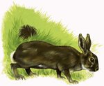 Rabbit Fine Art Print by English School