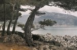 A coastal view through trees of the French Riviera, near Cannes, France, 1926 Fine Art Print by Carl Morgenstern