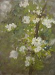 White Blossom Wall Art & Canvas Prints by Ben Henriques