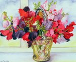 Sweet Peas in a Vase (w/c on paper) Postcards, Greetings Cards, Art Prints, Canvas, Framed Pictures, T-shirts & Wall Art by Jan Brueghel