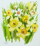 Daffodils and narcissus (w/c on hand-made paper) Postcards, Greetings Cards, Art Prints, Canvas, Framed Pictures, T-shirts & Wall Art by William Henry Hunt