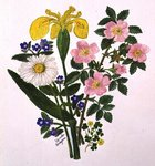 Iris, Speedwell, Daisy and Dog rose (w/c on paper)