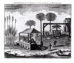 A Representation of the Sugar-Cane and the Art of Making Sugar, from 'Universal Magazine', published 1749 (engraving) (b/w photo) (see 165836) Wall Art & Canvas Prints by French School