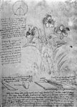 Studies of Violas (Viola odorata and Viola canina), fol. 14r from Manuscript B, c.1487-90 (pen and ink on paper) Wall Art & Canvas Prints by Sandro Botticelli