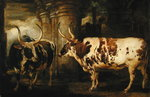 Portraits of two extraordinary oxen, the property of the Earl of Powis, 1814 (oil on panel) Fine Art Print by South African School