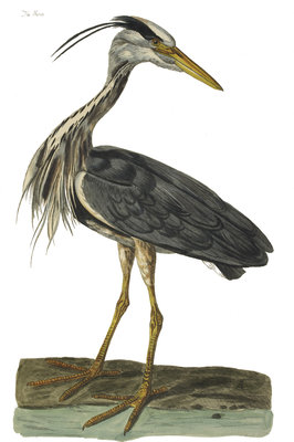Heron by P Mazel Brown - print
