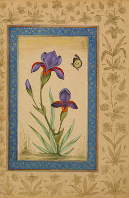 Blue iris with butterfly by Anonymous - print