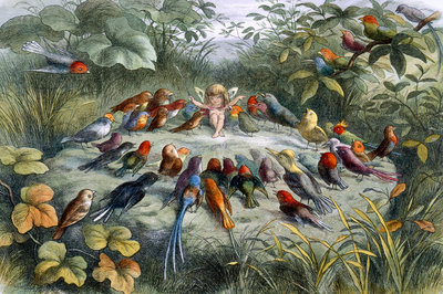 An elf conducts an orchestra of birds by Richard Doyle - print