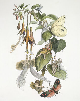 Feasting and fun among the fuschias by Richard Doyle - print