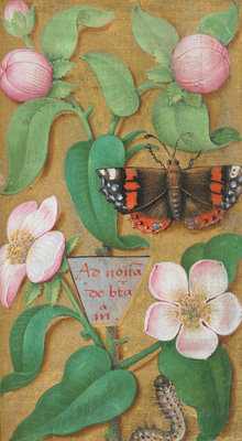 Flowers, caterpillar and butterfly by Anonymous - print