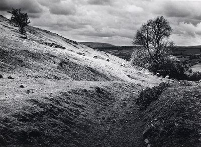 Rams with sheep by Fay Godwin - print