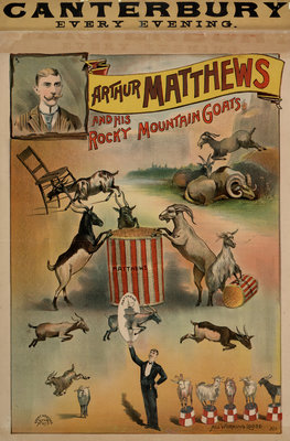 Arthur Matthews and his Rocky Mountain Goats by Anonymous - print