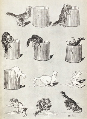 Sketches of cats by Theophile-Alexandre Steinlein - print