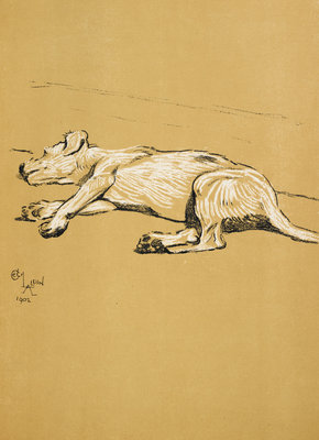 Dog by Cecil Aldin - print