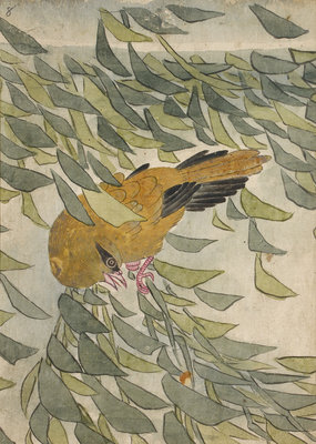 Golden oriole among leaves by Anonymous - print