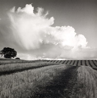 Large White Cloud near Bilsington by Fay Godwin - print