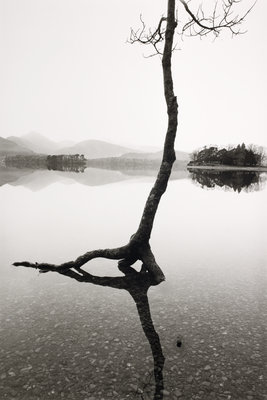 Flooded Tree by Fay Godwin - print