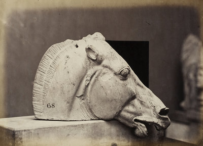 Sculptured Head of a horse by Leonida Caldesi - print