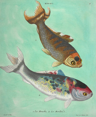 Kin-Yu: a pair of fish print by Edme Billardon-Sauvigne - print