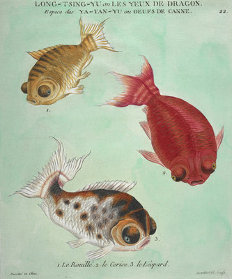 Long-Tsing-Yu trio of fish print by Edme Billardon-Sauvigne - print