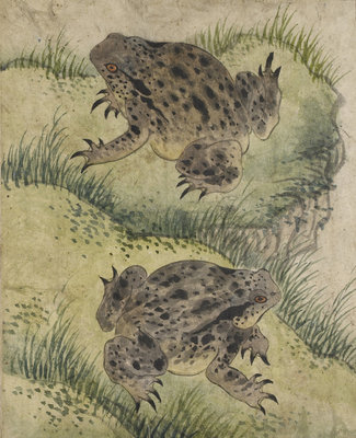 Toads on a grassy bank by Kyomjae - print