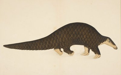 A scaly anteater by Anonymous - print