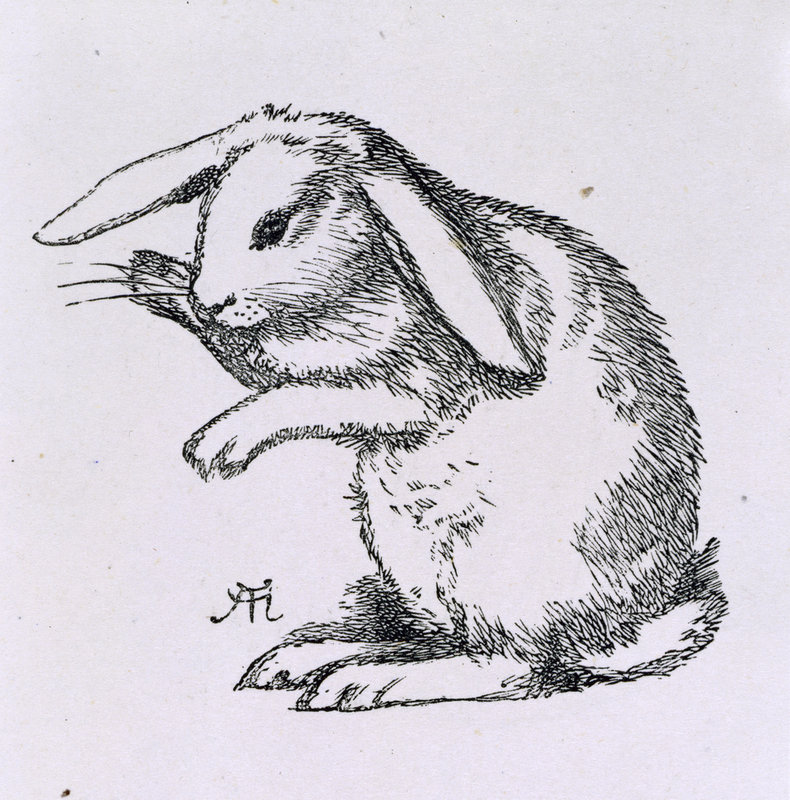 a rabbit by a hughes print - Picture To Print