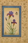 Blue iris with butterfly Fine Art Print by Muhammad Khan