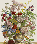 Flowers in a vase by Nikolaus Joseph Jacquin - print