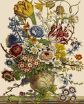 Flowers in a vase by Robert John Thornton - print