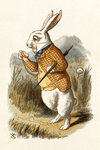The White Rabbit by John Tenniel - print