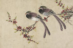 Long-tailed birds on plum tree branch