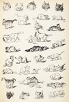 Sketches of cats by Louis Wain - print