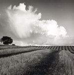 Large White Cloud near Bilsington Fine Art Print by Fay Godwin