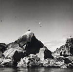 Shags Fine Art Print by Fay Godwin