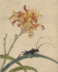 Beetle on a lily by Anonymous - print