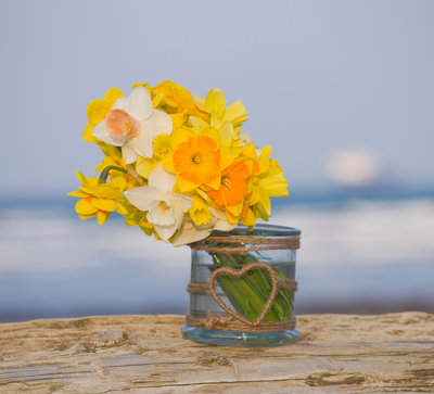 R.a.scamp, Quality Daffodils, Cornwall: Daffodils In A Glass Jar By The Seaside Near Falmouth Wall Art & Canvas Prints by Clive Nichols